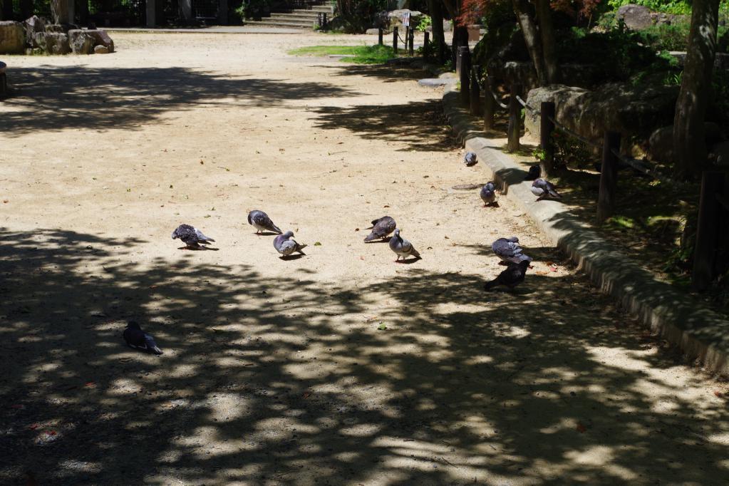 諏訪神社の横の広場