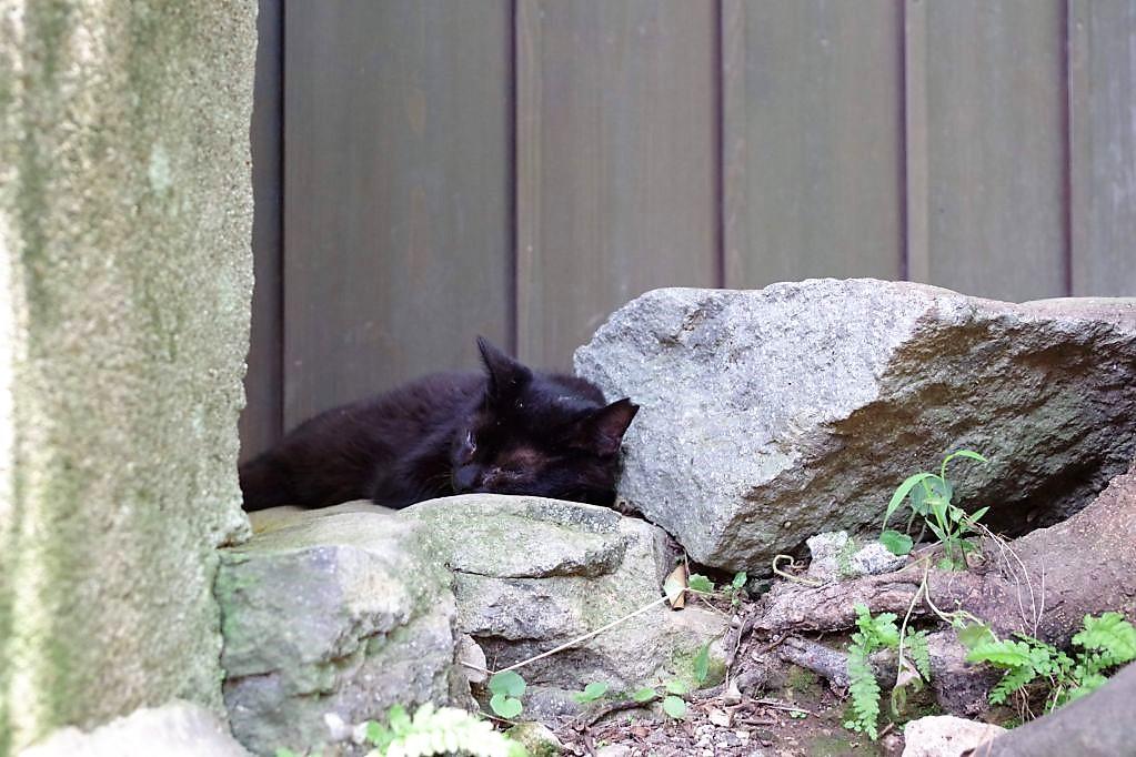 昼寝する黒猫