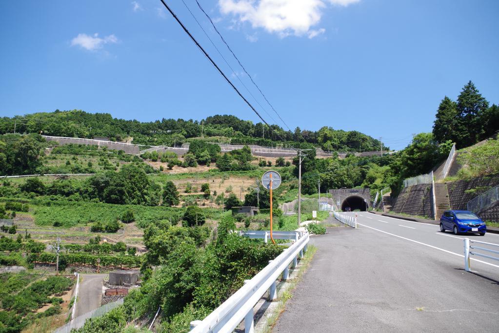 琴の尾岳へ続く道