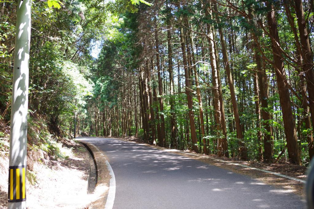 琴の尾岳林道 width=