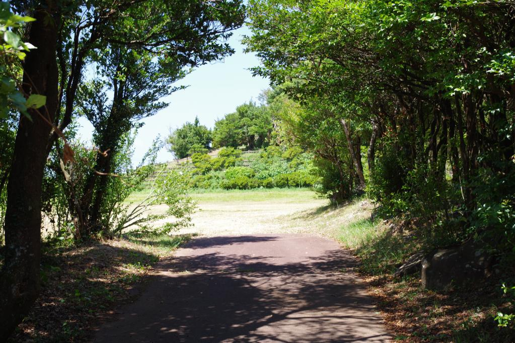 琴の尾岳展望台へ続く道